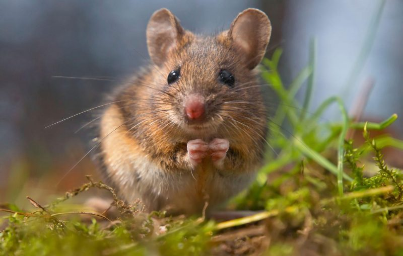 pest control mice utah