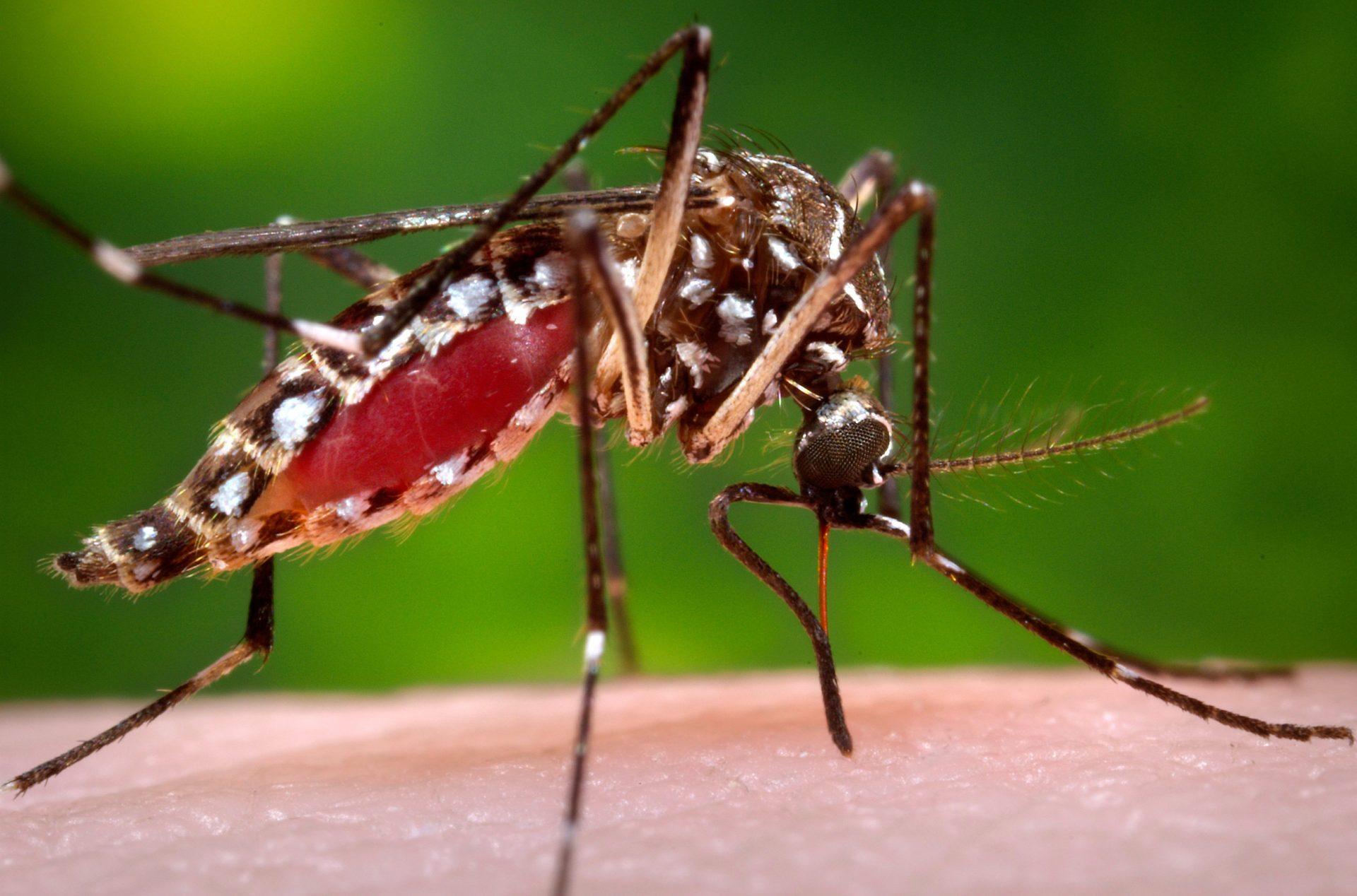 Mosquito control Utah