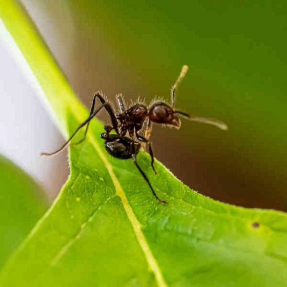 Utah Ant Control
