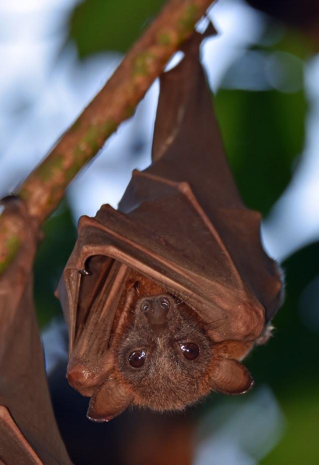 Bat in Utah
